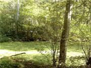 Forêt-180