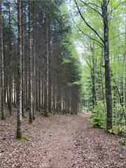 Forêt-près-de-Le-Vaud-180
