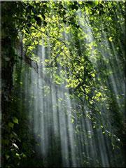 Lumière-dans-les-arbres-180