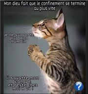 Prière-du-chat-180