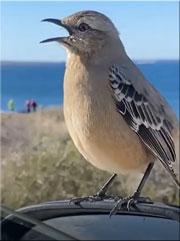 oiseaux-chanteurs-180
